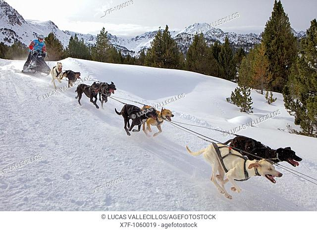 Pirena  Sled dog race in the Pyrenees going through Spain, Andorra and France  Grandvalira  Andorra