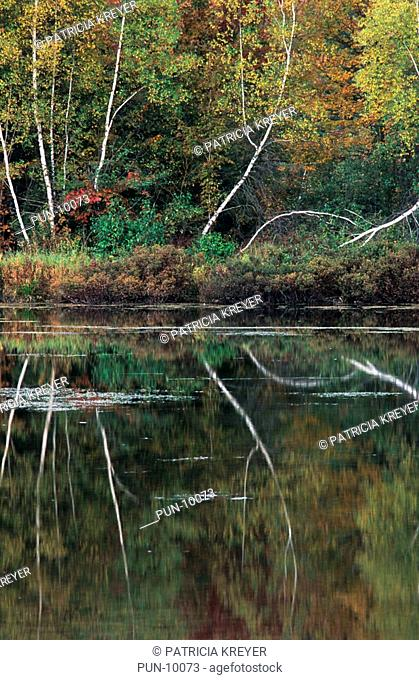 Reflection of birch trees in Baker Pond, south of Stowe, Vermont