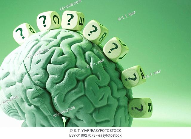 Question Marks and Anatomy Model of Human Brain