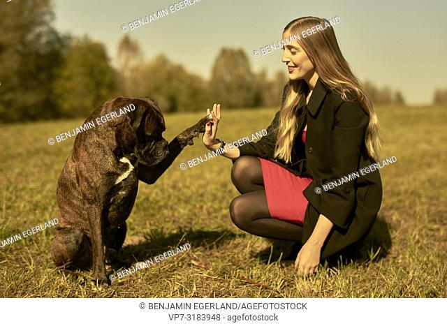woman and dog giving high five, on meadow in Unterhaching, Munich, Bavaria, Germany