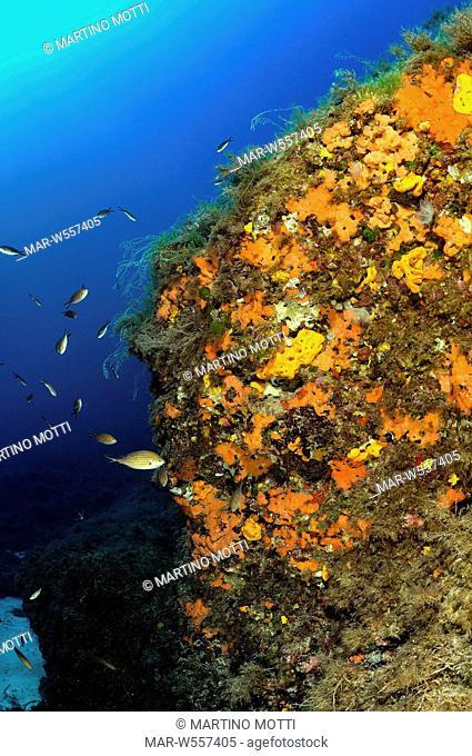 fondale coralligeno a punta cappellone, lampedusa