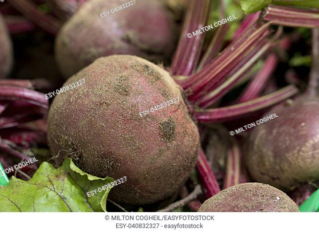 A close up image of freshly harvested, unwashed beetroot