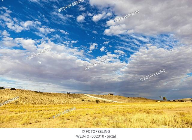 Africa, Botswana, South Africa, Kalahari, View of landscape in kgalagadi Transfrontier Park