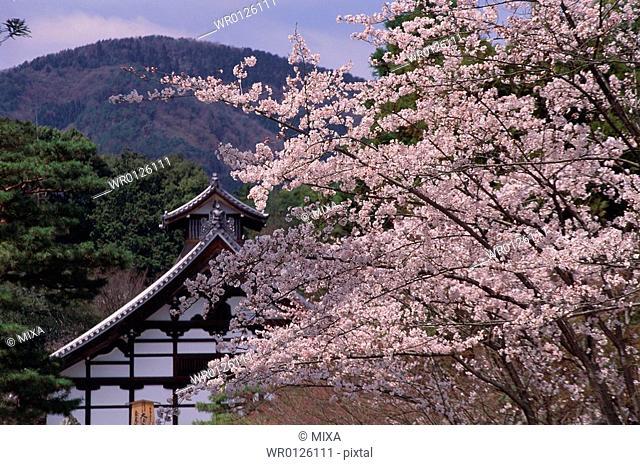Tenryu-ji Temple, Kyoto Prefecture, Japan