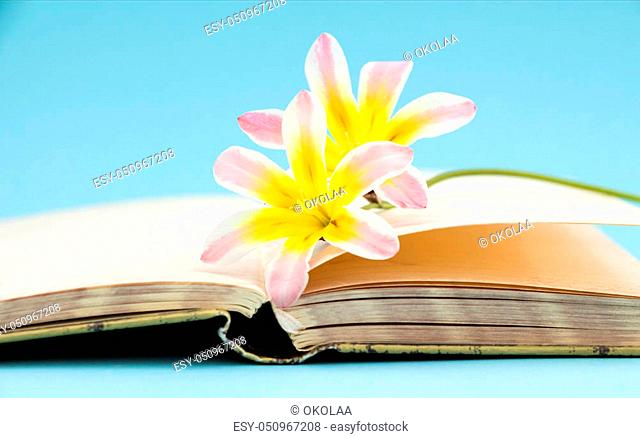 Colorful spring flowers, with blank open diary closeup, on light blue background