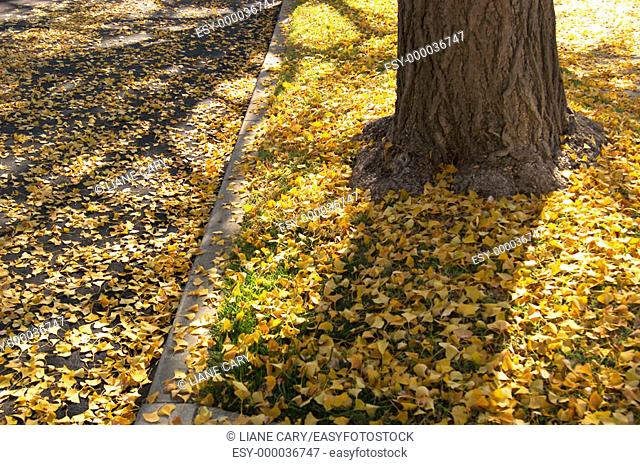 autumn leaves in street