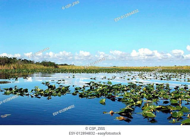 Everglades Wetland