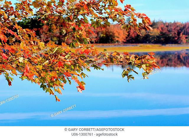 autumn leaves on a tree beside a lake