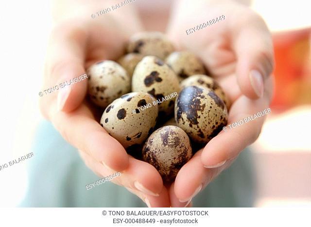 Woman hands holding fragile quail eggs, newborn care metaphor