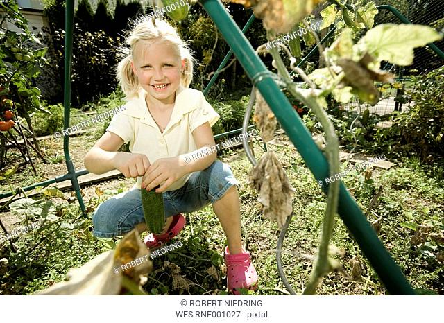 Germany, Bavaria, Girl gathering cucumbers in vegetebale garden