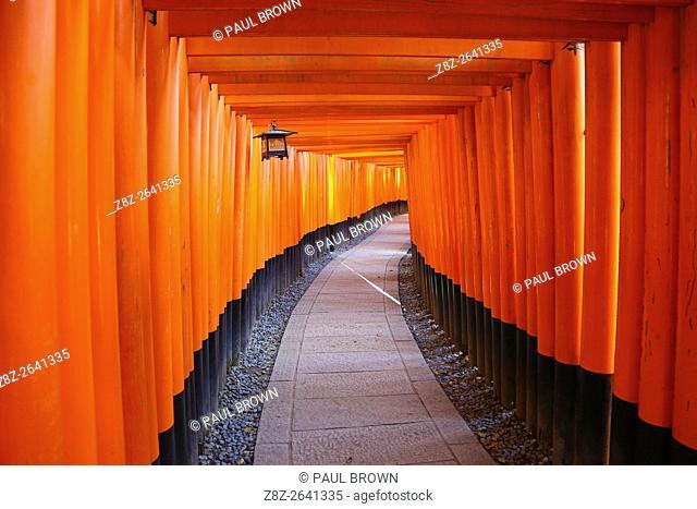 Senbon Torii, tunnels of red torii gates, at Fushimi Inari Shinto shrine in Kyoto, Japan