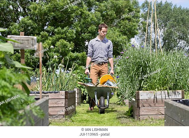 Man with wheelbarrow gardening in sunny summer vegetable garden allotment