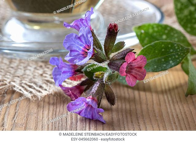 Detail of fresh lungwort, or pulmonaria flowers on a table