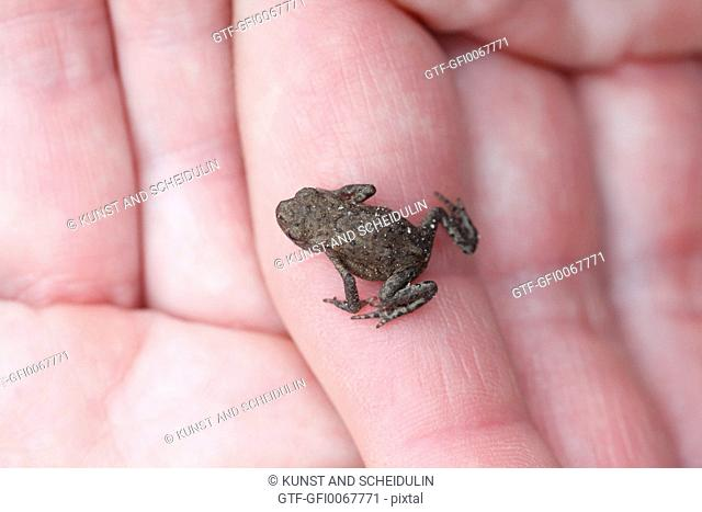 Young frog sitting on female hands