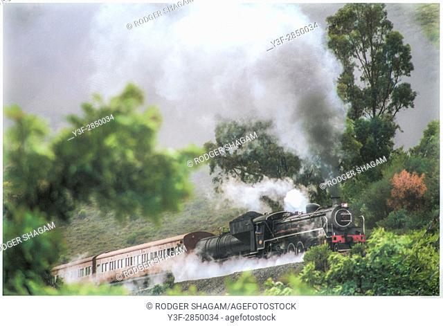 An old steam engines hauls it's passenger coaches through a forest