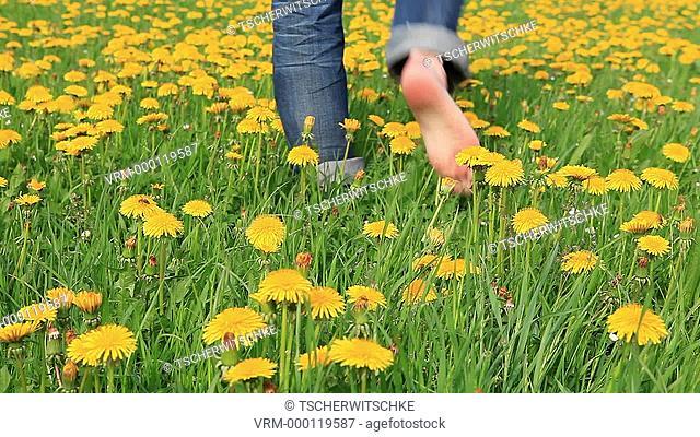 Flower meadow, feet, jeans
