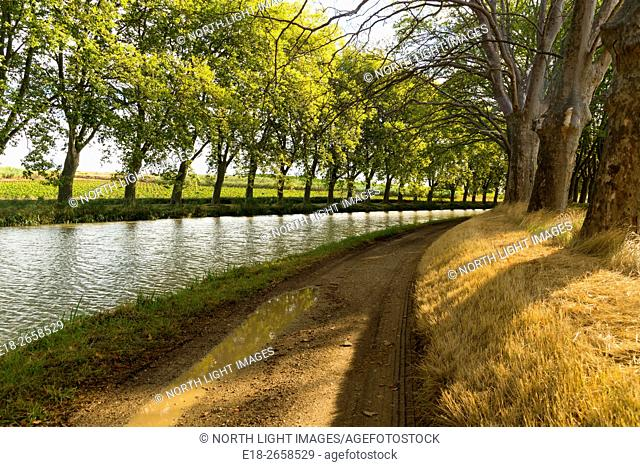 EU, France, Ventenac. The tow path alongside the Canal du Midi, lined with plane trees, in Southern France. The Canal du Midi connects Toulouse in the south of...
