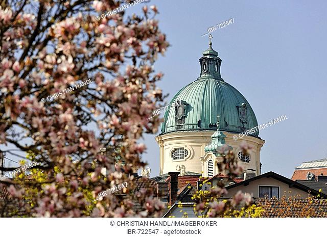 Magnolia blossoms in the foreground, and the dome of the Margaretenkirche (St. Margaret's Church), Berndorf, Triestingtal, Lower Austria, Austria, Europe