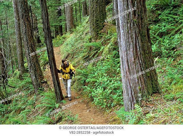 Ancient forest along Trestle Creek Falls Trail, Umpqua National Forest, Oregon