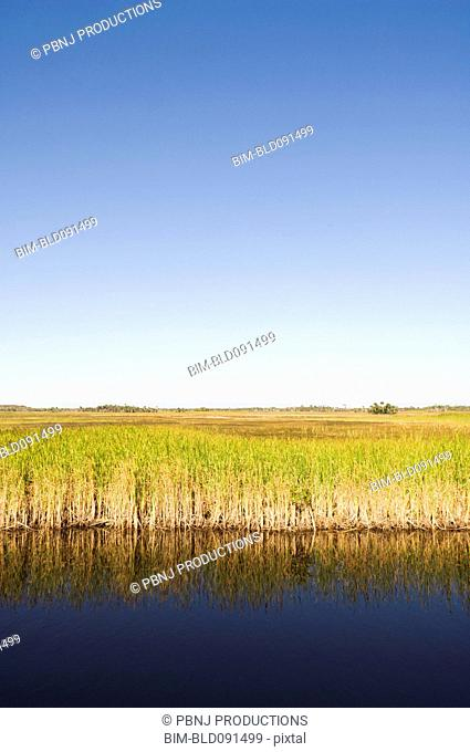 Water and grass in everglades