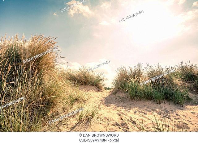 Dunes and marram grasses on Norfolk coast, UK