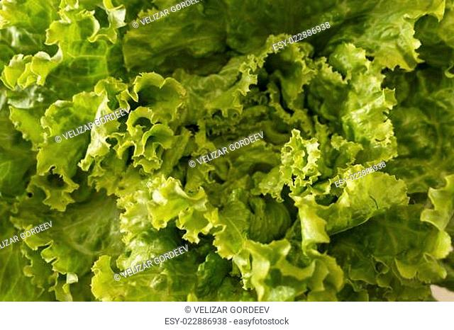 Lettuce salad, fragment. Abstract background