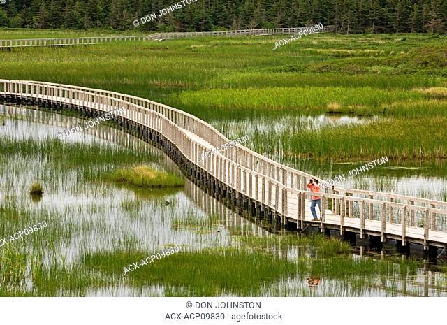 Boardwalk over Bowley Pond, with visitor  Prince Edward National Park Greenwich, Prince Edward Island, Canada