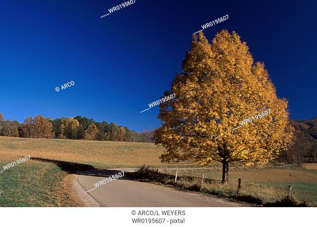 Deciduous, Tree, in, autumn, Great, Smoky, Mountains, national, park, North, Carolina, USA