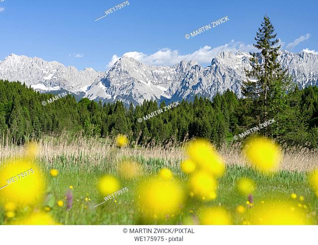 Karwendel mountain range near Mittenwald, Lake Wagenbruch See (Geroldsee) during spring, globeflowers in the foreground. Europe, central europe, germany