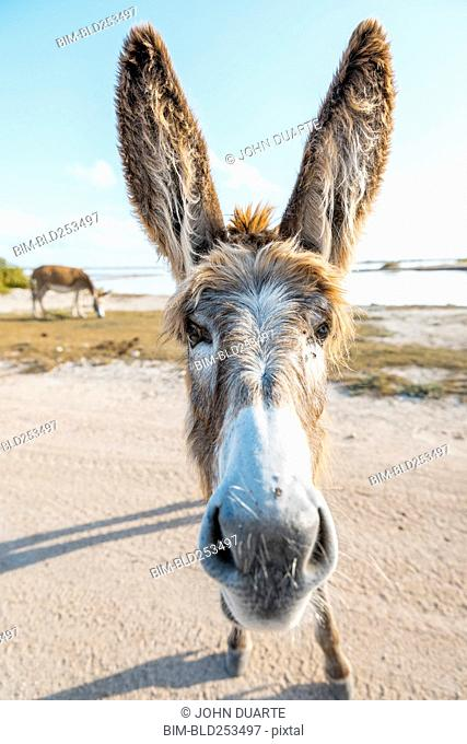 Close up of face of donkey