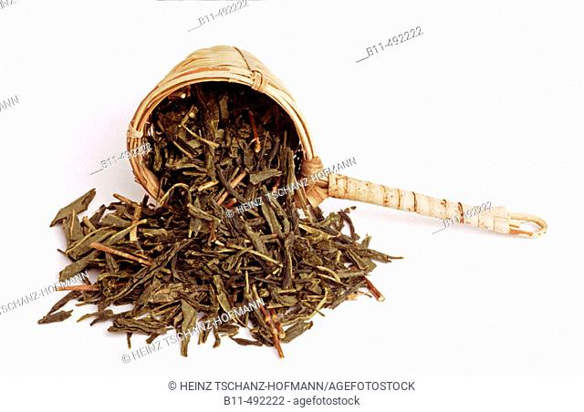Green tea, Camellia sinensis, dried leaves of the teaplant