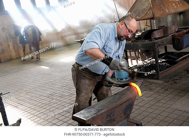Farrier making horseshoe, Haras du Pin, Normandy, France, March