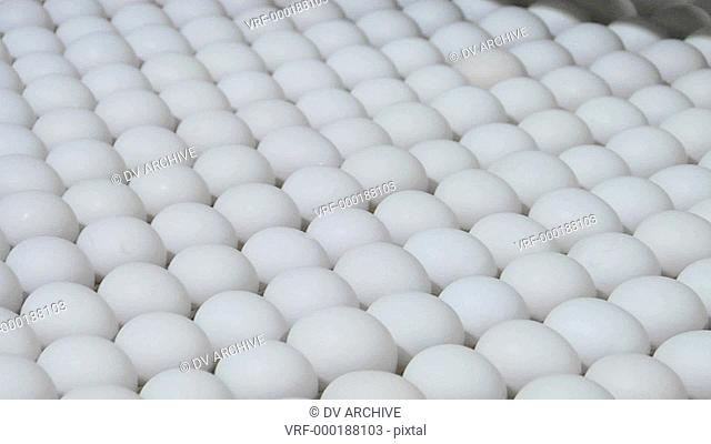 White eggs move along on a factory conveyor belt