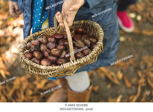 Girl carrying basket with chestnuts