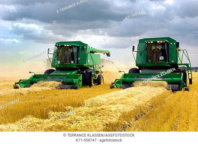 John Deere combines harvesting wheat on a field near Winkler in southern Manitoba. Canada