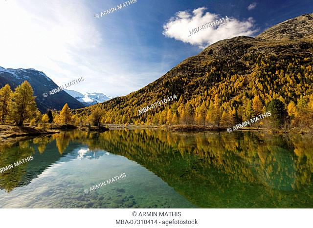 The Golden October shows at Pontresina from the most beautiful side, view on Bellavista, canton of Grisons, Switzerland
