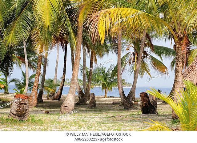Seaside palm grove on the sandy beach of San Blas Islands, Panama, Central America