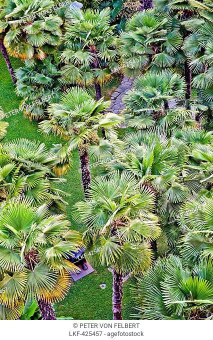 Palm trees in the park of Hotel Castagnola, Lugano, Ticino, Switzerland