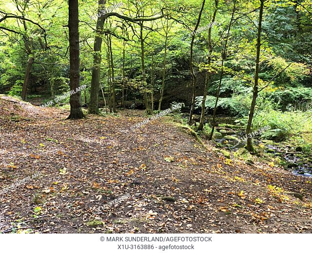 Early autumn trees by Loadpit Beck in Shipley Glen near Baildon West Yorkshire England