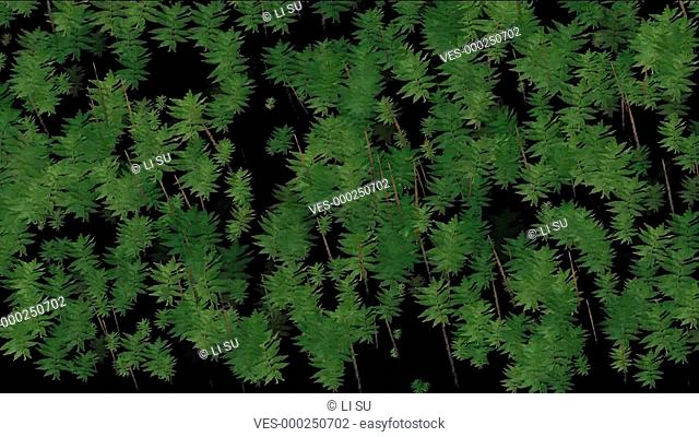 Animation of tree is swing,forest,jungle,algae,animal,mountains,love,reproduction,particle,joy,happiness,happy,Design,pattern,symbol,dream,vision,idea