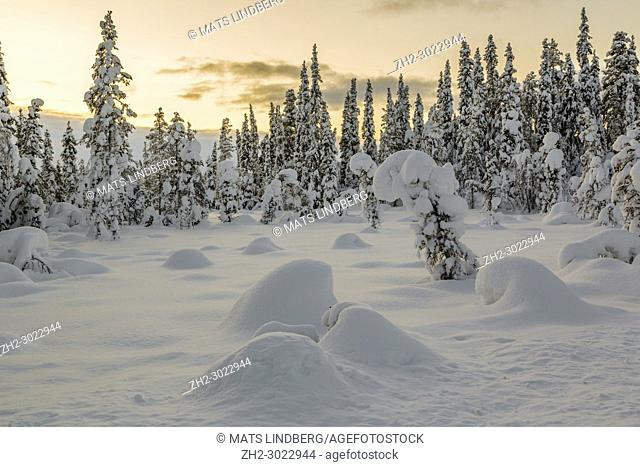 Sunset over winter landscape with snowy trees, Gällivare county, swedish Lapland, Sweden