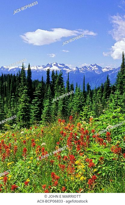 Spectacular wildflower meadows on Mount Revelstoke with Mount Begbie in the background, British Columbia, Canada