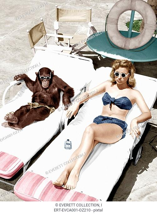 Chimpanzee and a woman sunbathing Old Visuals