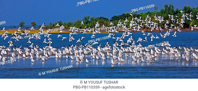 Flock of birds at the Sundarbans, a UNESCO World Heritage Site and a wildlife sanctuary The largest littoral mangrove forest in the world