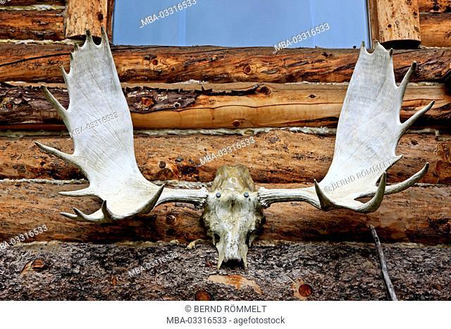 North America, the USA, Alaska, Brooks Range, Wiseman, elk's shovel