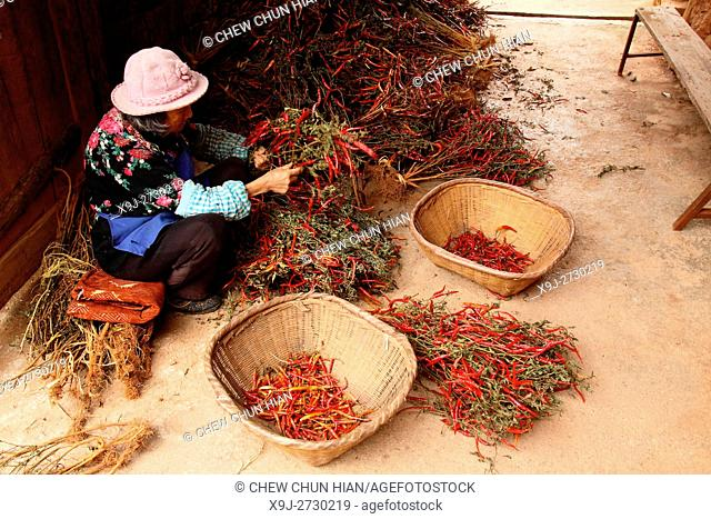 Women sorting peppers, puzhehai, Yunnan province, China