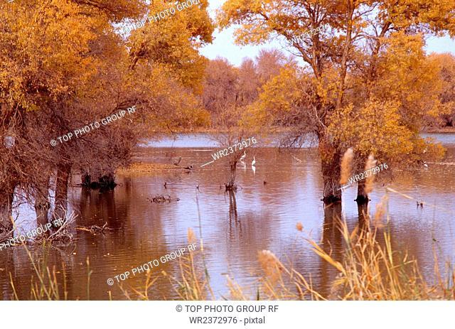 Tarim Basin Keriya River Urumqi City Xinjiang Autonomous Region China