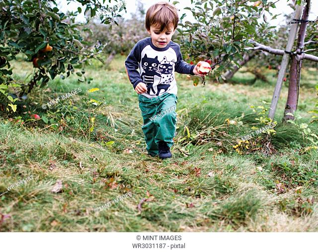 Young boy with brown hair wearing printed shirt and green trousers walking in an orchard, holding half eaten apple