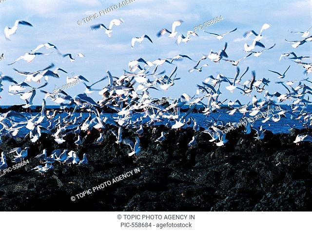 Seagulls,Jeju Island,Korea