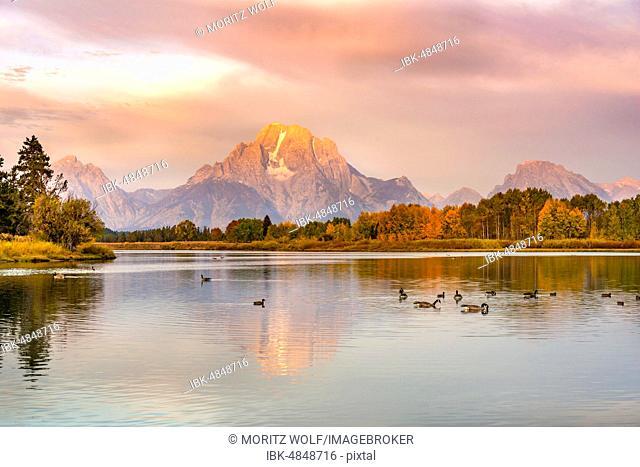 Mount Moran reflected in Snake River, morning mood at Oxbow Bend, autumn trees and Grand Teton Range, Grand Teton National Park, Wyoming, USA